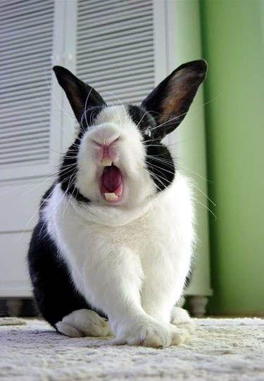 Causas por las que tu conejo te puede morder