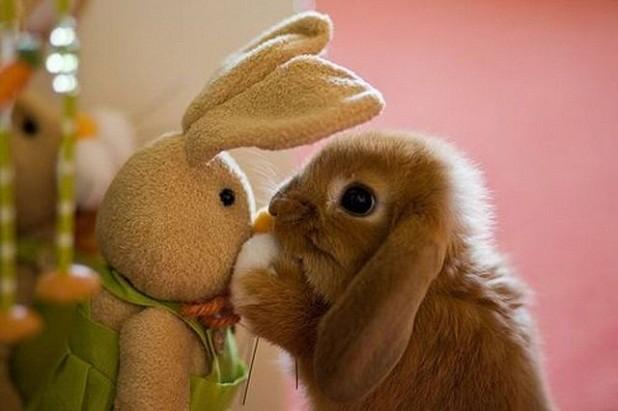 juguetes para conejos - conejo jugando con peluche
