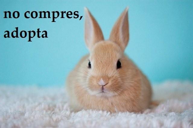 Conejos enanos - ¿comprar o adoptar?