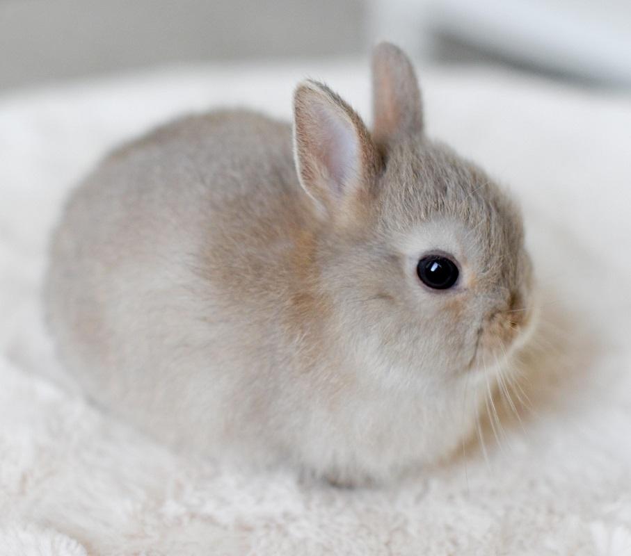 como cuidar a conejo recién nacido